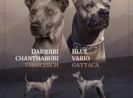 Inzercia psov: Thajský ridgeback - Ex...