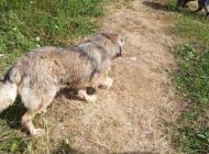 Inzercia psov: Darujem do dobrých rúk