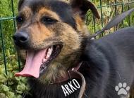 Inzercia psov: Arko, pokojný spoločník