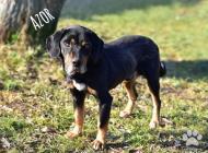 Inzercia psov: AZOR, priateľský jedin...