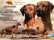 Inzercia psov: Šteniatka Rhodesian Ri...