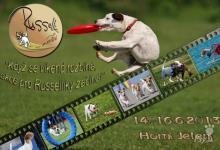 Inzercia psov: RUSSELLÍCI V AKCI