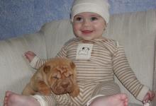 Inzercia psov: Šarpej (Shar Pei) - špičková štěňata s PP