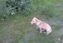 Inzercia psov: Darujem psíka Ronyho