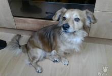 Inzercia psov: Darujeme krásneho psíka