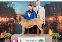 Inzercia psov: Brazilská Fila – CHS Birengo nabízí štěňata vrh O