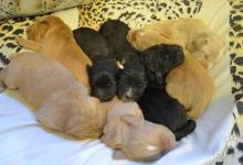 Inzercia psov: Darujeme steniatka