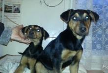 Inzercia psov: Psíci na adopciu