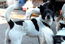 Inzercia psov: Darujem fenu PANDA