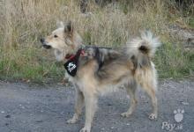 Inzercia psov: Darujem psa TYLER
