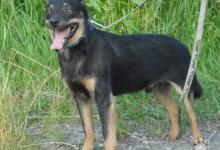 Inzercia psov: Darujem psa TWISTER