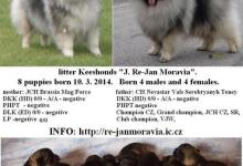 Inzercia psov: Keeshond / vlčí špic prodám štěňata s PP
