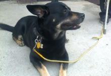 Inzercia psov: Pomozte zachranit zivot mileho psika :)
