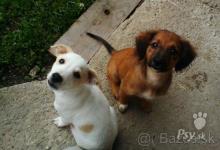 Inzercia psov: Nekupujte-ADOPTUJTE!