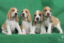 Inzercia psov: Švycký durič