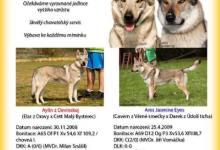 Inzercia psov: Šteniatka československého vlčiaka s PP