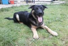 Inzercia psov: Darujem štena