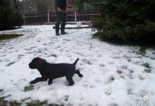 Inzercia psov: Prodej štěňat