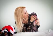 Inzercia psov: Taliansky chrtík * Gorgeous Italian greyhound