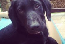 Inzercia psov: Darujem krásneho psíka