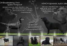 Inzercia psov: Labrador s PP
