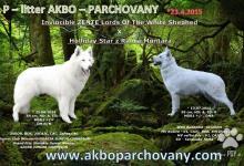 Inzercia psov: Biely švajčiarsky ovčiak špičkové šteniatka s PP.