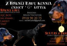 Inzercia psov: SLOVENSKY KOPOV s PP -Chov.stanica z HORNEJ BABY