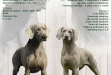 Inzercia psov: Štěňata Weimarského stavače krátkosrstého s PP