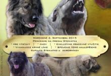 Inzercia psov: Kaukazský ovčiak