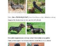 Inzercia psov: Prodej štěňátka jezevčíka drsnosrstého standard