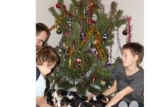Inzercia psov: Štěňátka Appenzellský salašnický pes s PP