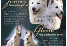 Inzercia psov: Biely švajčiarsky ovčiak s PP