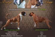 Inzercia psov: Nabízíme rezervace na štěnátka Boxera