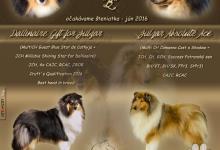 Inzercia psov: Kólia dlhosrstá - šteniatka s PP