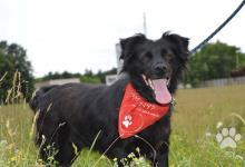 Inzercia psov: Misty hľadá DO alebo nový domov!