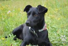 Inzercia psov: Malinká Marney hľadá nový domov!