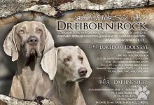 Inzercia psov: Weimarský stavač – šteniatka s PP