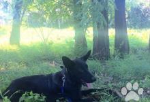 Inzercia psov: Darujem - do dobrých rúk - iba rodinný dom