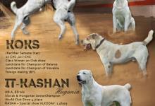 Inzercia psov: Stredoázijský ovčiak s PP