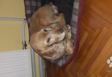 Inzercia psov: Lili