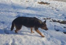 Inzercia psov: Súrne hľadá domov