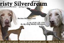 Inzercia psov: Zadám šteniatka