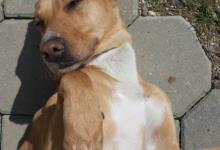 Inzercia psov: Molly hľadá domov