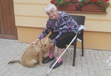 Inzercia psov: Darujem psíkov