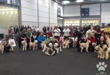 Inzercia psov: Irish Soft Coated Wheaten Terrier