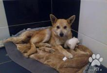 Inzercia psov: Darujem psíka