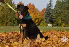 Inzercia psov: Archi- verný psík hľadajúci domov