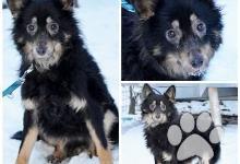 Inzercia psov: Ricky- hľadá nový domov- na adopciu