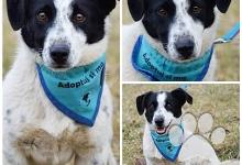 Inzercia psov: Rudy- prejavuje neskutočnú radosť na prechádzkach