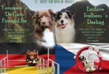 Inzercia psov: PLÁNOVANÝ ZAHRANIČNÍ VRH-AUSTRALSKÝ OVČÁK